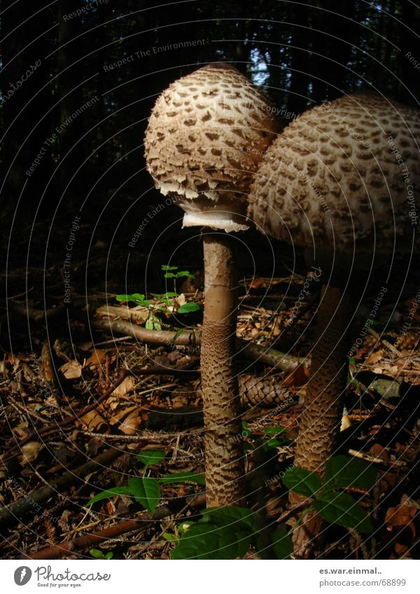 Plant Animal Forest Small Earth Exceptional Climate Large To go for a walk Branch Living thing Vegetable Stalk Intoxicant Mushroom Strange