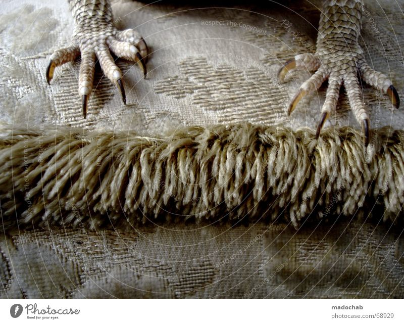 TITLE PICTURE | lizard clawed kites reptiles style design sofa Saurians Claw Sofa Reptiles Style Design Feet Legs geilomat Fat boah ey bold contrast and so