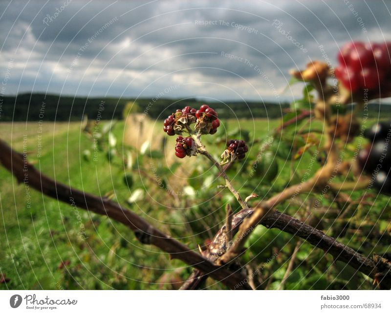 Nature Sky Clouds Meadow Rain Field Weather Americas Thunder and lightning Raspberry Headstrong Stubble field Blackberry