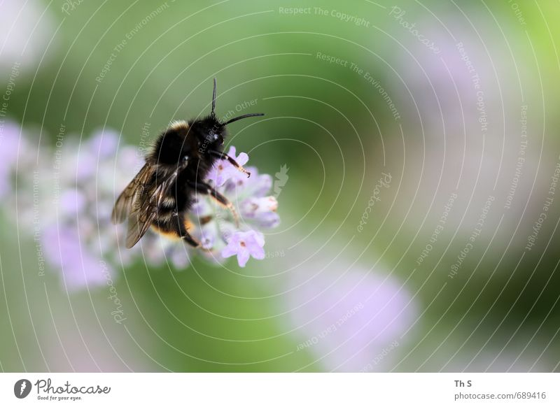 Nature Beautiful Colour Plant Calm Animal Blossom Natural Elegant Esthetic Blossoming Joie de vivre (Vitality) Serene Bee Fragrance Harmonious