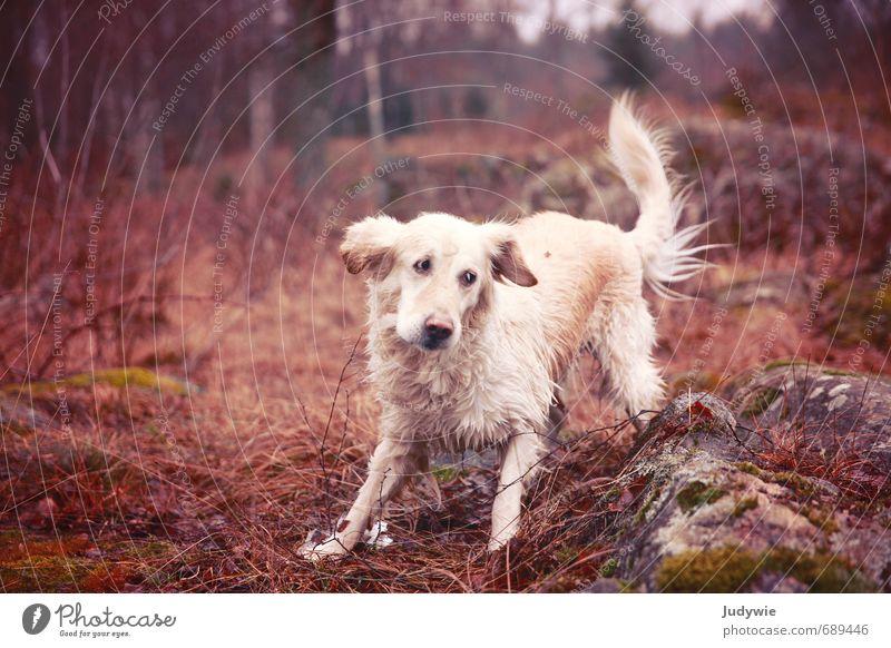 Dog Nature Plant Landscape Joy Animal Winter Forest Environment Life Movement Autumn Sports Freedom Happy Rock
