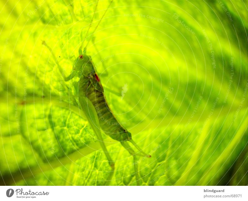 Nature Green Leaf Lamp Jump Small Sit Safety Insect Hide Disgust False Feeler Hop Camouflage Locust
