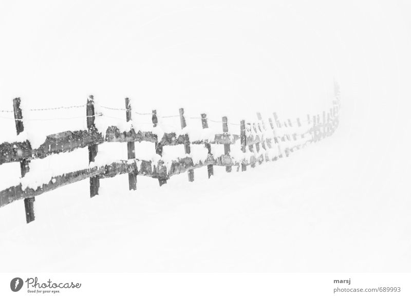 Nature Old White Loneliness Winter Dark Cold Sadness Snow Gray Wood Snowfall Ice Fog Gloomy Authentic