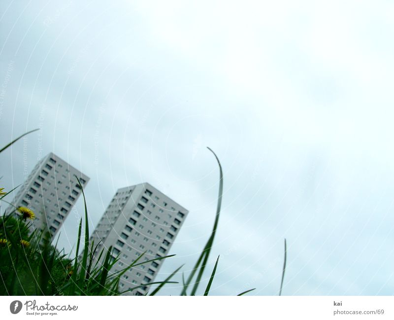 WE-01 Meadow High-rise Town Architecture Grass Grass meadow Blade of grass Worm's-eye view Copy Space top Copy Space right Size comparison Converse 2 Tilt