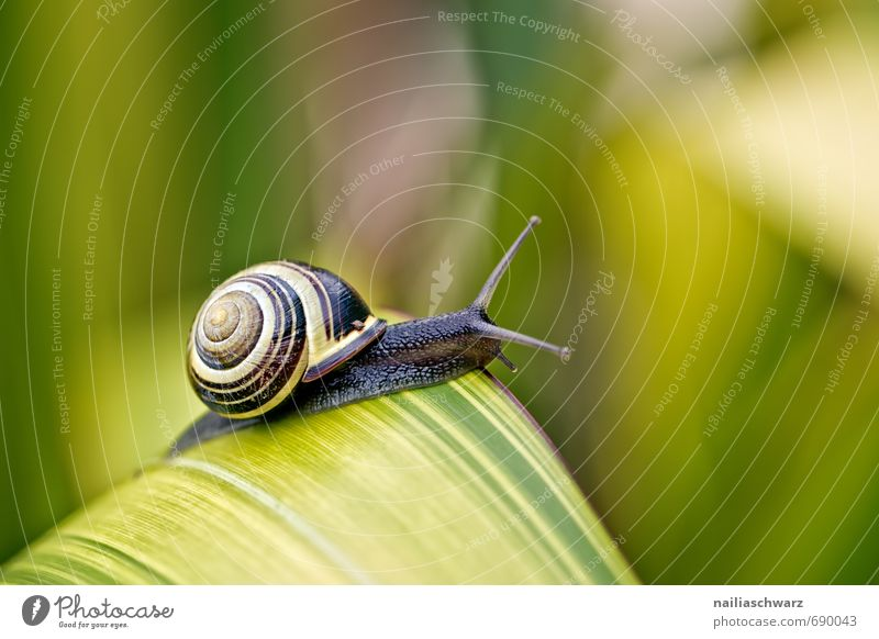 Snail in the garden Garden Plant Animal Spring Leaf Antenna Running Observe Discover To enjoy Crawl Friendliness Happiness Natural Curiosity Cute Beautiful