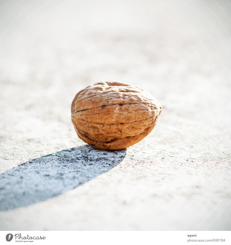 nut Nut Walnut Esthetic Simple Bright Nature Protection Edible Sheath Nutshell Candy Snack Colour photo Exterior shot Close-up Shallow depth of field