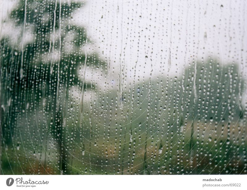 Tree Sadness Rain Weather Grief Gloomy Thunder and lightning Distress Window pane Vista Bad weather Precipitation