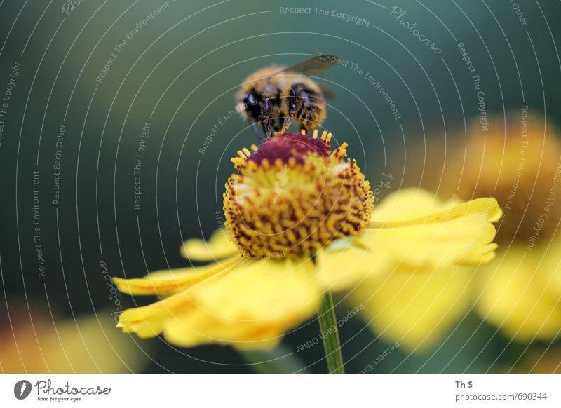 Nature Beautiful Colour Plant Summer Animal Spring Blossom Natural Elegant Esthetic Blossoming Joie de vivre (Vitality) Bee Fragrance Harmonious