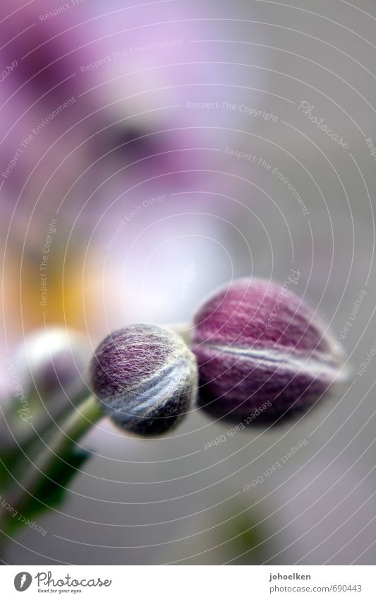 Nature White Plant Relaxation Calm Blossom Garden Park Wait Blossoming Round Safety Wellness Violet Fragrance Hang