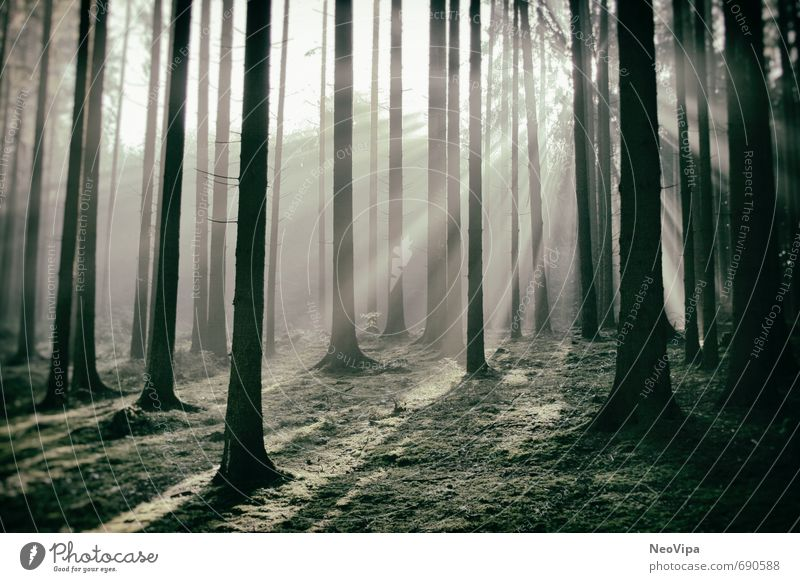 In the morning in the forest Life Harmonious Well-being Contentment Calm Meditation Fitness Sports Training Environment Nature Landscape Plant Earth Climate