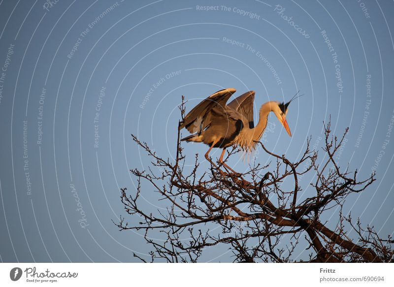 Sky Nature Blue White Tree Animal Black Movement Gray Above Flying Bird Orange Wild animal Cloudless sky Grey heron