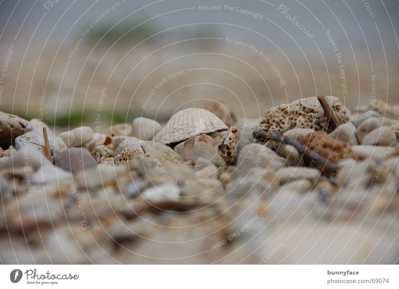 Water Ocean Beach Vacation & Travel Loneliness Gray Stone Search Hide Mussel Gravel Pebble Croatia Adriatic Sea Pebble beach Trogir