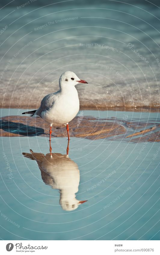 Hm, totally oversalted here. Calm Ocean Winter Snow Environment Nature Animal Water Climate Beautiful weather Ice Frost Coast Baltic Sea Wild animal Bird 1