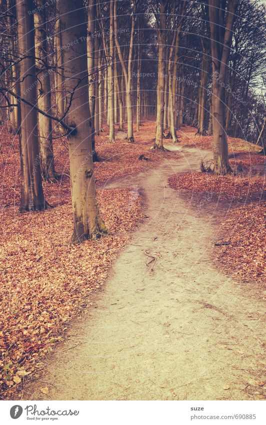 About the old path Environment Nature Landscape Plant Earth Autumn Tree Park Forest Lanes & trails Growth Fantastic Large Tall Natural Loneliness Mysterious