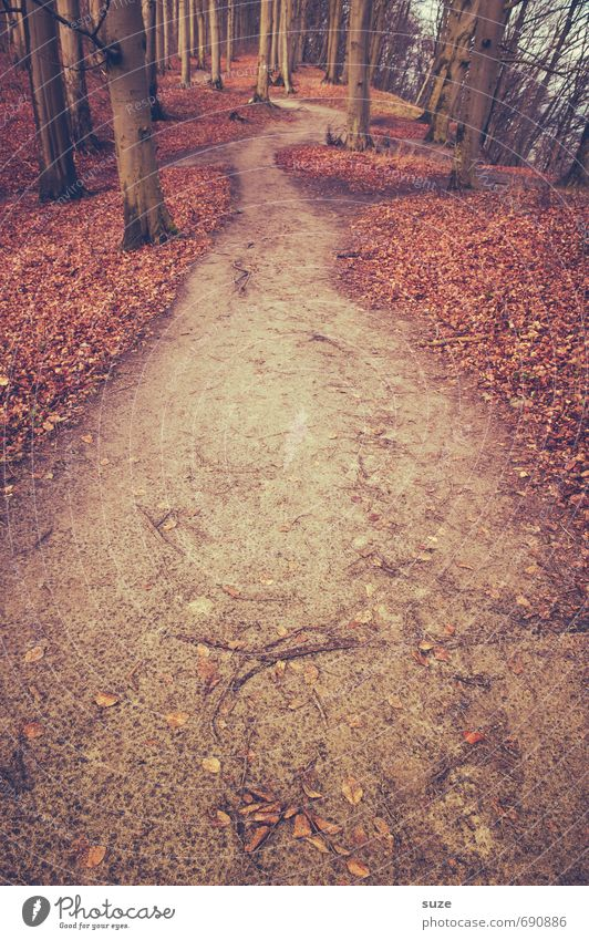 That's the one. Environment Nature Landscape Plant Earth Autumn Tree Park Forest Lanes & trails Growth Fantastic Large Tall Natural Loneliness Mysterious Idyll