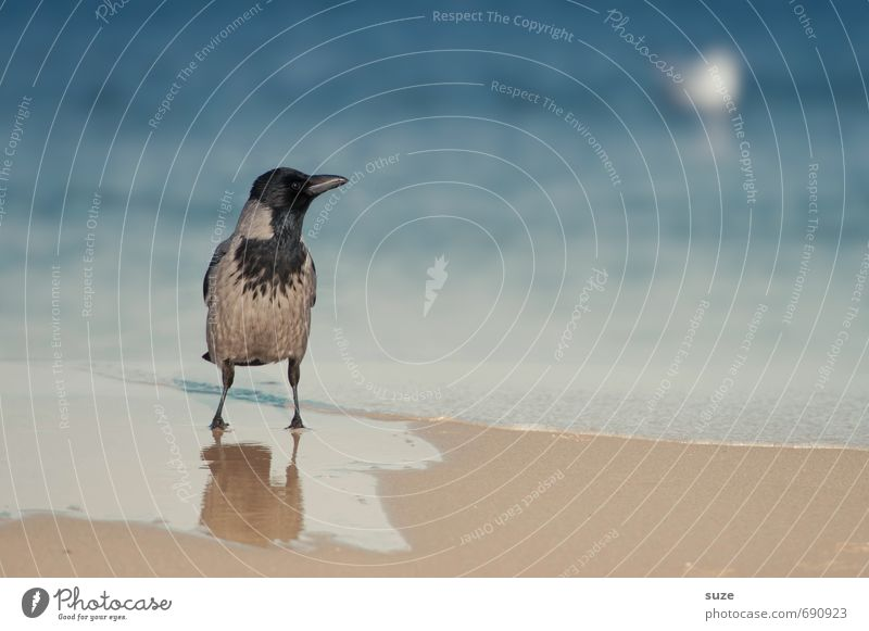 A loner would love to be a seagull. Calm Beach Ocean Environment Nature Animal Water Weather Coast Baltic Sea Wild animal Bird 1 Stand Wait Exceptional Cold Wet