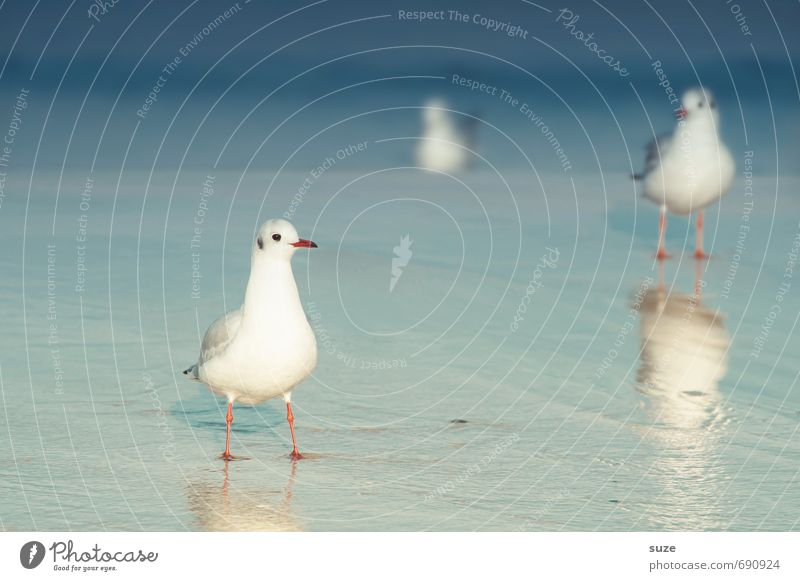 Jonathan and loud water Calm Summer Summer vacation Ocean Environment Nature Animal Water Climate Beautiful weather Coast Baltic Sea Wild animal Bird 3 Stand