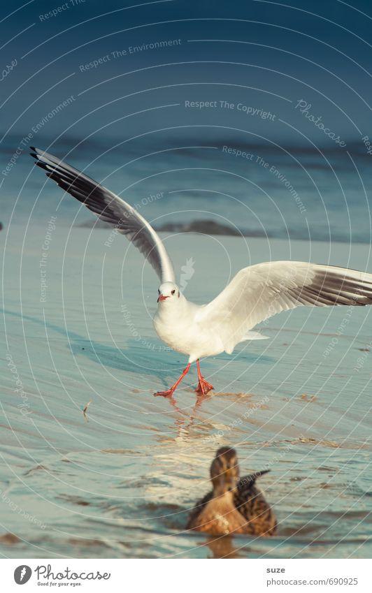 Sky Nature Blue Water Ocean Animal Cold Environment Movement Coast Swimming & Bathing Horizon Flying Bird Weather Wild