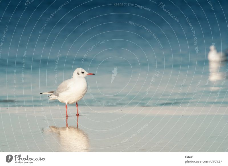 Nature Blue Water Summer Ocean Calm Animal Cold Environment Coast Natural Small Bird Wild animal Stand Wait