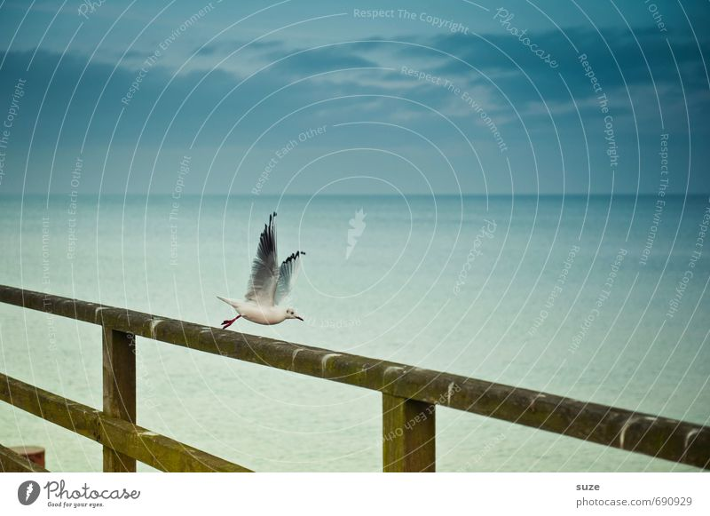 Sky Nature Blue Ocean Animal Cold Movement Coast Small Freedom Flying Bird Air Wild animal Authentic Beginning