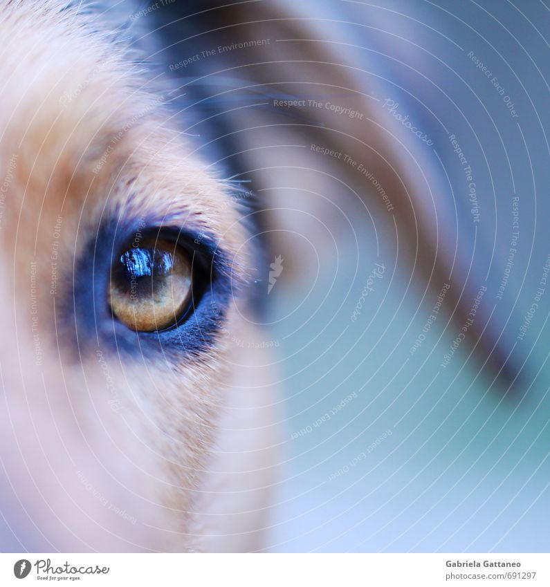 Hundeauge Pet Dog 1 Animal Wild Soft Eyes dogseye Reflection Macro (Extreme close-up) Blue Colour photo Exterior shot Shallow depth of field Looking
