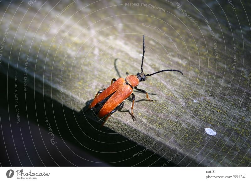 Red Wood Table Insect Beetle Departure