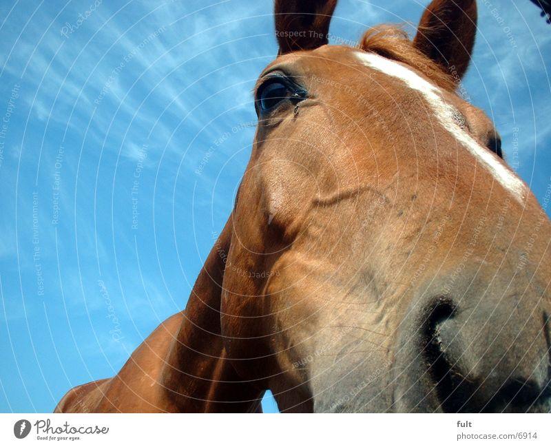 horse Horse Nose Sky ponny Fly