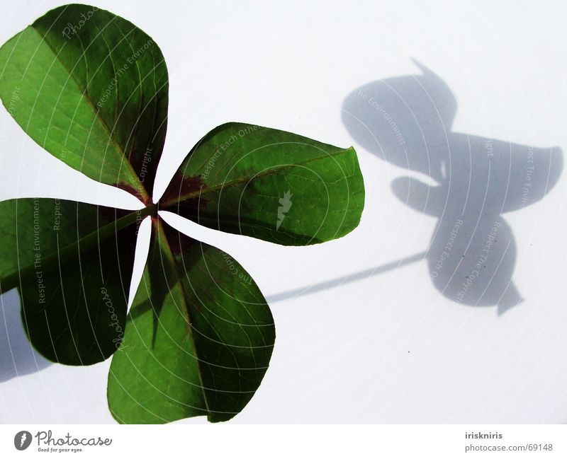 Happiness found Clover Green Japan Ornamental clover Four-leaved Symbols and metaphors Desire 4 leaves Shadow Happy Close-up heart-shaped Structures and shapes