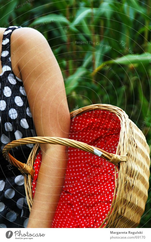 Green Red Arm Point Basket Plaited Maize field