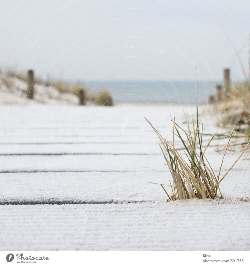 to the sea Vacation & Travel Tourism Trip Beach Ocean Winter Winter vacation Environment Nature Landscape Sand Water Sky Grass Coast Baltic Sea Contentment