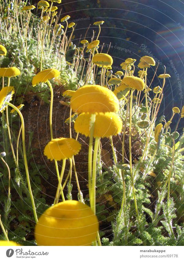 Nature Sky Flower Rain Earth Universe Australia Flower meadow
