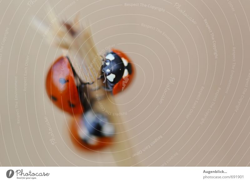 Joy Animal Life Happy Group of animals Joie de vivre (Vitality) Safety (feeling of) Beetle Flock Ladybird Animal family