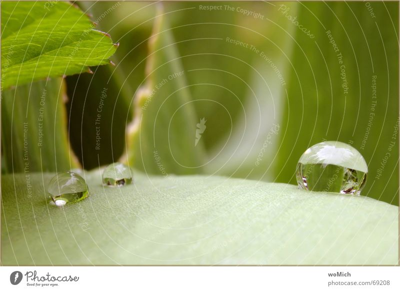 ooh~~O Reflection Sphere Drops of water Rain Clarity Wet Green Leaf Exterior shot drop world drip route Nature Garden Jinxed Macro (Extreme close-up)