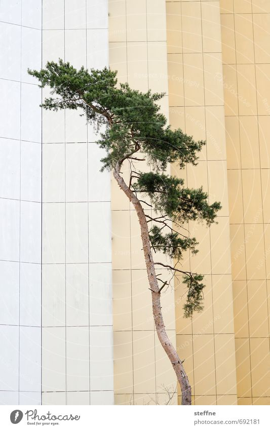 Trees (1/8) Nature Growth Oxygen Environment Climate Ecological Forest Tree trunk Branch Coniferous trees Town Facade