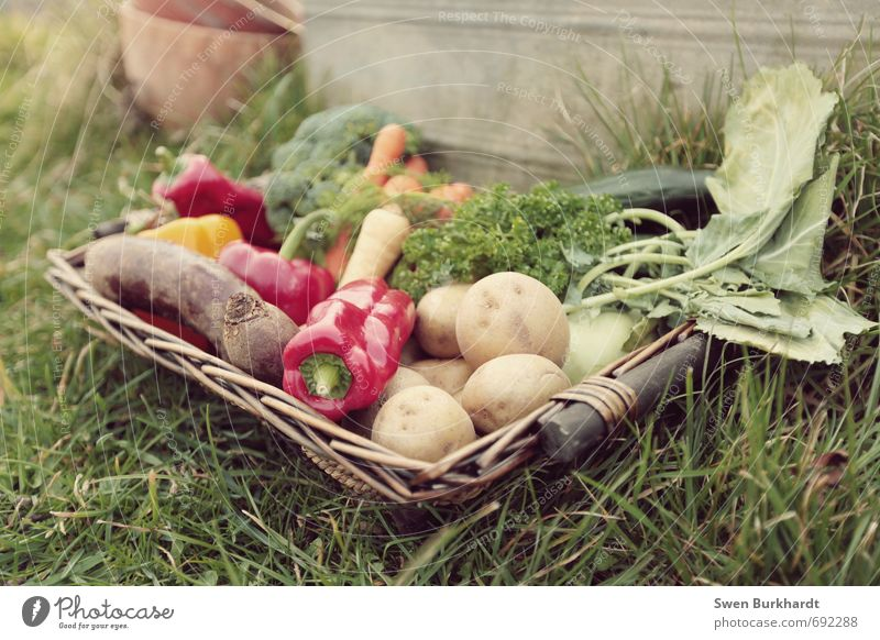 Vegetable day.... Food Lettuce Salad Pepper Red beet Potatoes Rapes Carrot Nutrition Breakfast Lunch Dinner Banquet Picnic Organic produce Vegetarian diet Diet
