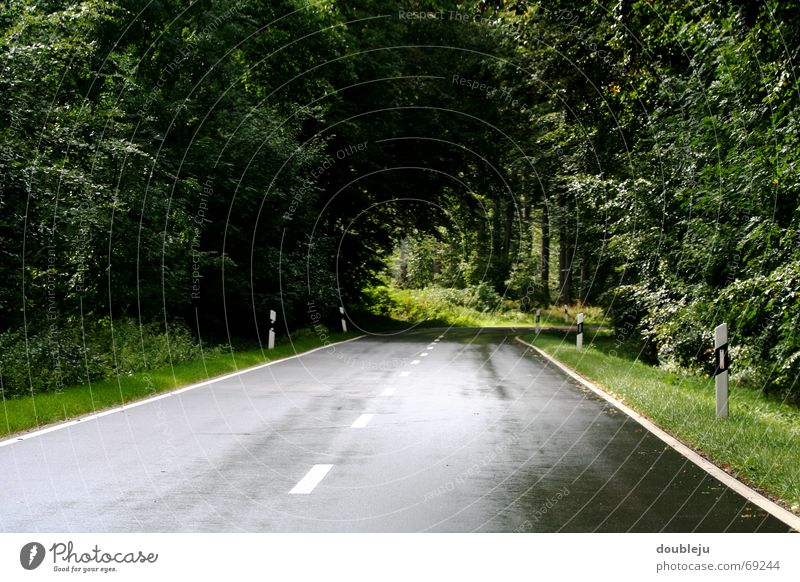 Nature Tree Street Forest Rain Line Driving Tunnel Damp Curve Bavaria Organic farming Clearing