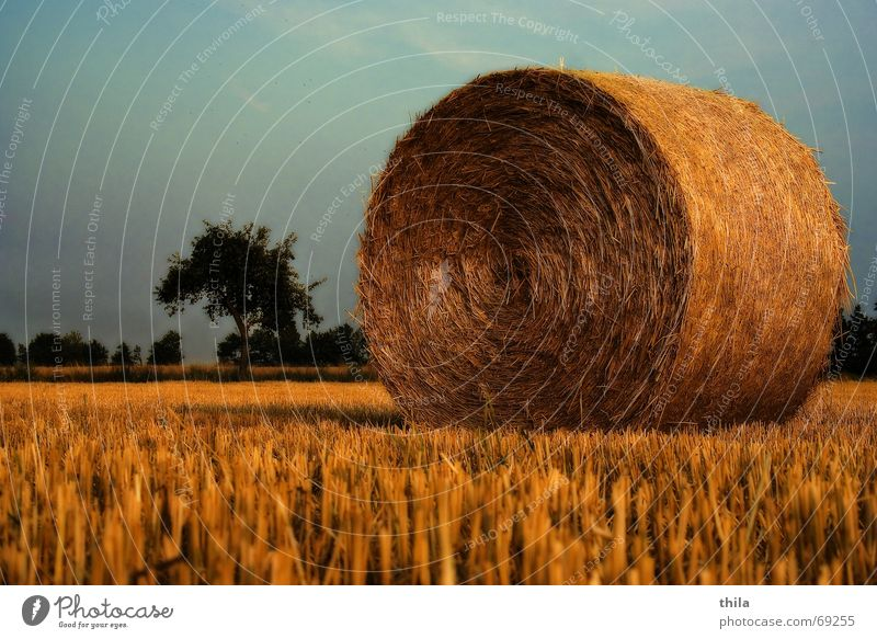 flash in the pan Harvest Bale of straw Field Stubble field Calm Relaxation Nature