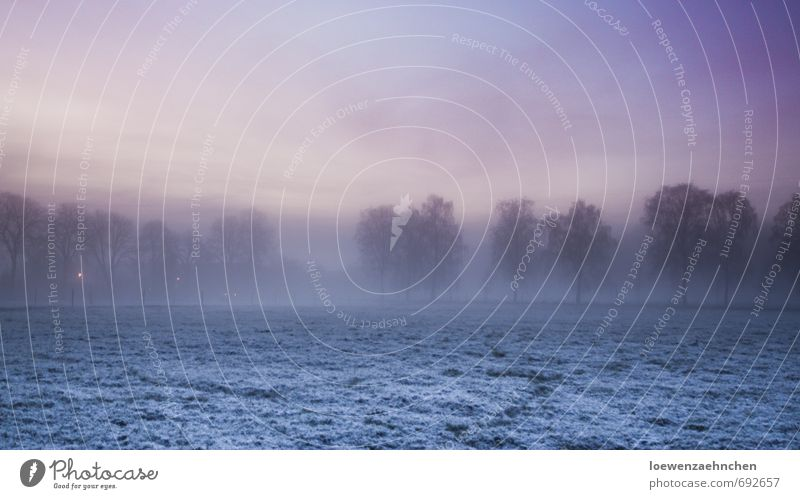 befogged Nature Landscape Animal Sky Winter Fog Snow Tree Meadow Freeze Cold Natural Blue Violet Pink Contentment Serene Patient Calm Loneliness Relaxation