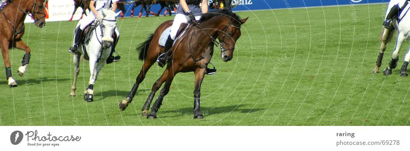 Sports Movement Horse Equestrian sports World Cup Aachen