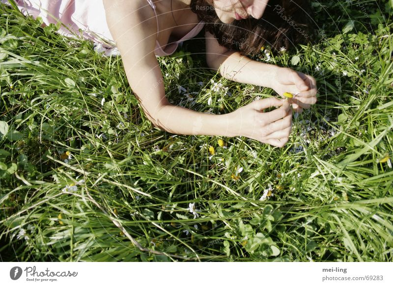 Woman Summer Grass Daisy