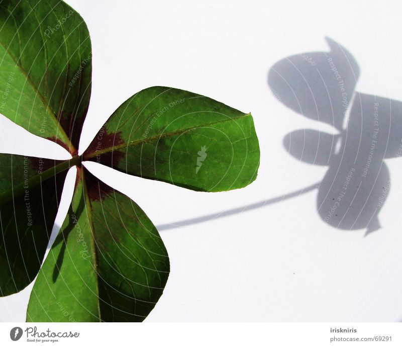 Happiness found III Clover Green Japan Ornamental clover Four-leaved Symbols and metaphors Desire 4 leaves Shadow Happy Close-up heart-shaped