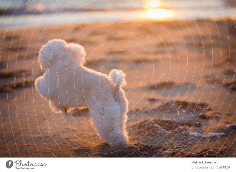 JuMp ARoUnd Environment Nature Landscape Elements Sand Sun Sunlight Summer Climate Beautiful weather Waves Coast Beach Ocean Animal Pet Dog 1 Movement Discover
