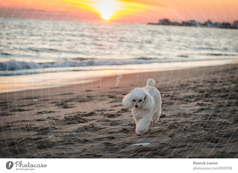 Dog Sky Nature White Water Ocean Loneliness Landscape Clouds Animal Beach Environment Coast Sand Air Weather