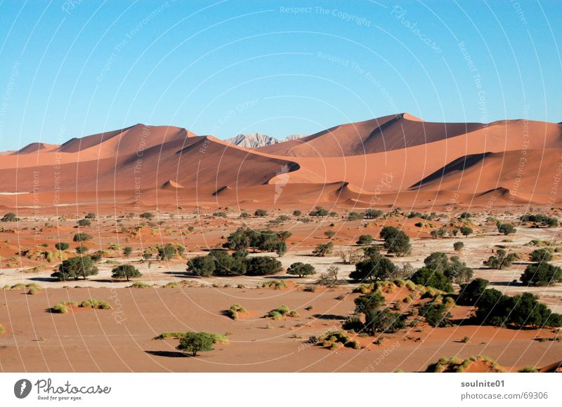 Nature Calm Loneliness Far-off places Sand Desert Africa Beach dune Vantage point Untouched Namibia Namib desert Sossusvlei