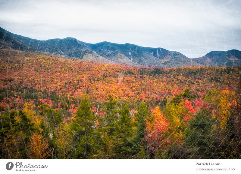 Indian Summer III Environment Nature Landscape Elements Sky Sun Autumn Climate Weather Beautiful weather Plant Tree Forest Hill Mountain Peak Exceptional