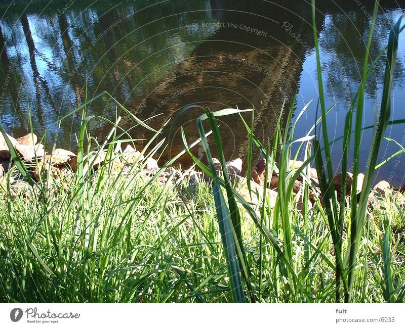 bank Grass Reflection Coast Water