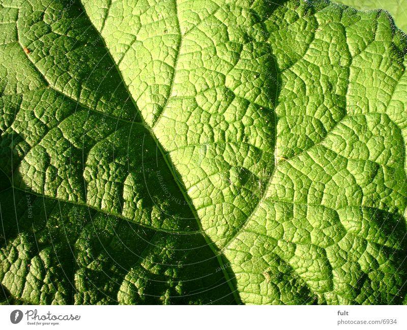 leaf Leaf Green Fresh Structures and shapes
