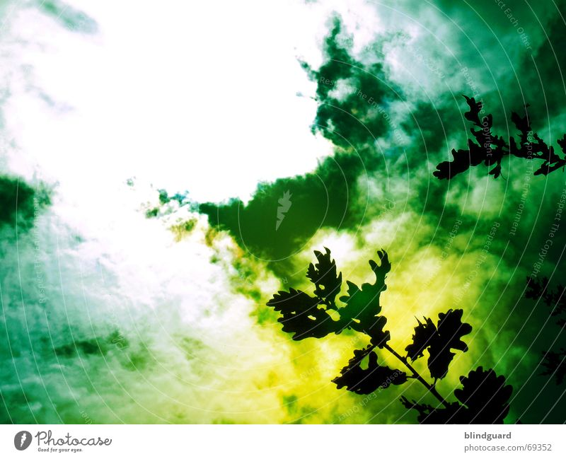 Green Leaf Clouds Yellow Dark Rain Dangerous Branch Smoke Disgust Accident Poison Chemistry Filter Unhealthy