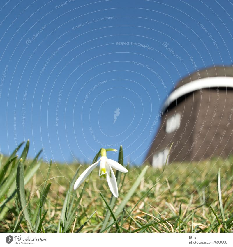 Something's spinning. Windmill Snowdrop Meadow Sky Deserted Blue Green