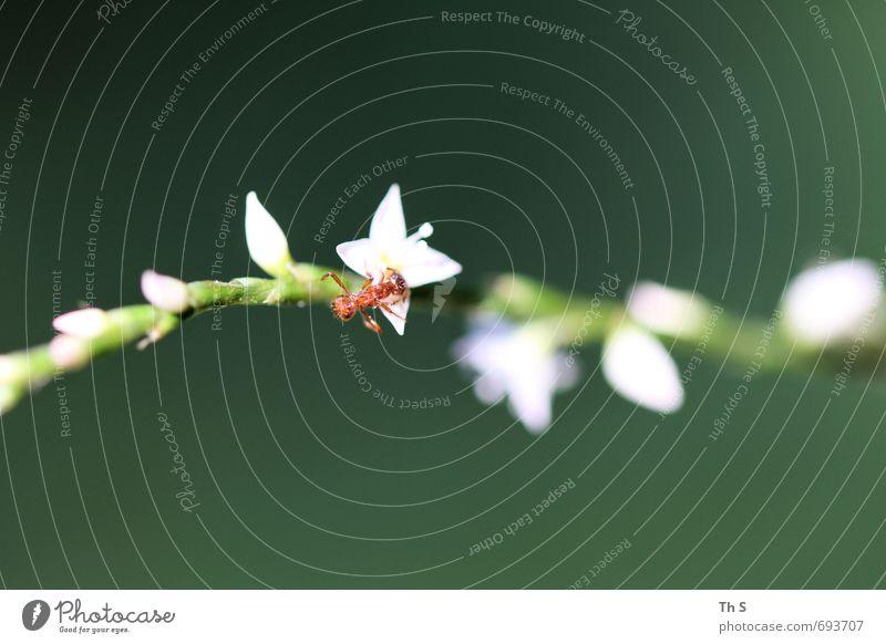 ant Nature Plant Animal Spring Summer Wild animal 1 Blossoming Discover Esthetic Elegant Near Curiosity Beautiful Green Red White Joie de vivre (Vitality)